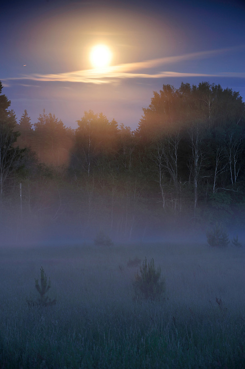 Moonlight in Kemeri National Park, Latvia