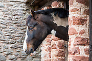 Skewbald paint horse in stable in Exmoor National Park, Somerset, United Kingdom