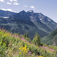 View of the mountains and wildflowers, from Going-to-the-Sun Road, Glacier National Park, Montana