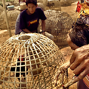 CHIANG RAI -MARCH 12 2006: Unlike the more vicious fights in Indonesia, Thai cocks do not fight to the death - the birds are worth too much and the owners do not want to lose them. When one is knocked out or attempts to escape the ring, the fight is over, and the birds will return to fight another day. Fear of Bird Flu caused officals to ban Thai cock fights in 2005, but a persistent movement of Thai's claiming the social significance of the sport and a reduction in Bird Flu cases has allowed the fights to resume. (Photo by Logan Mock-Bunting)