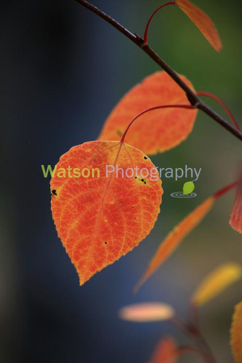 Autumn Light in the Dark 2_2016_Heidi Watson