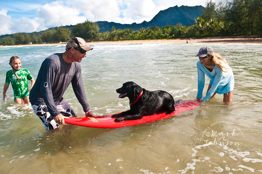 Family having fun with their Black labrador on surfboard,  Hanalei Bay, Kauai, Hawaii