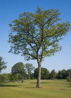 WINTERSWIJK -  Hole 4. Golf & Country Club Winterswijk, golfbaan De Voortwisch.     COPYRIGHT  KOEN SUYK