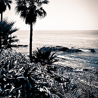 Toned black and white photo of Laguna Beach California shoreline along the Pacific Ocean. Laguna Beach is a seaside beach community in Orange County Southern California.