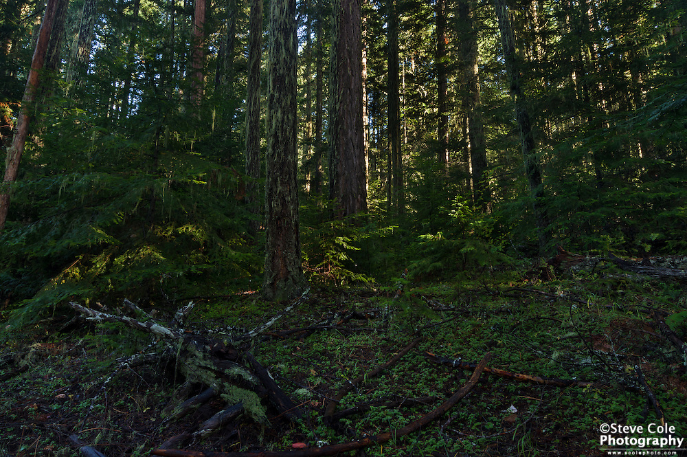 Spam Timber Sale Unit C #1 - South Umpqua River