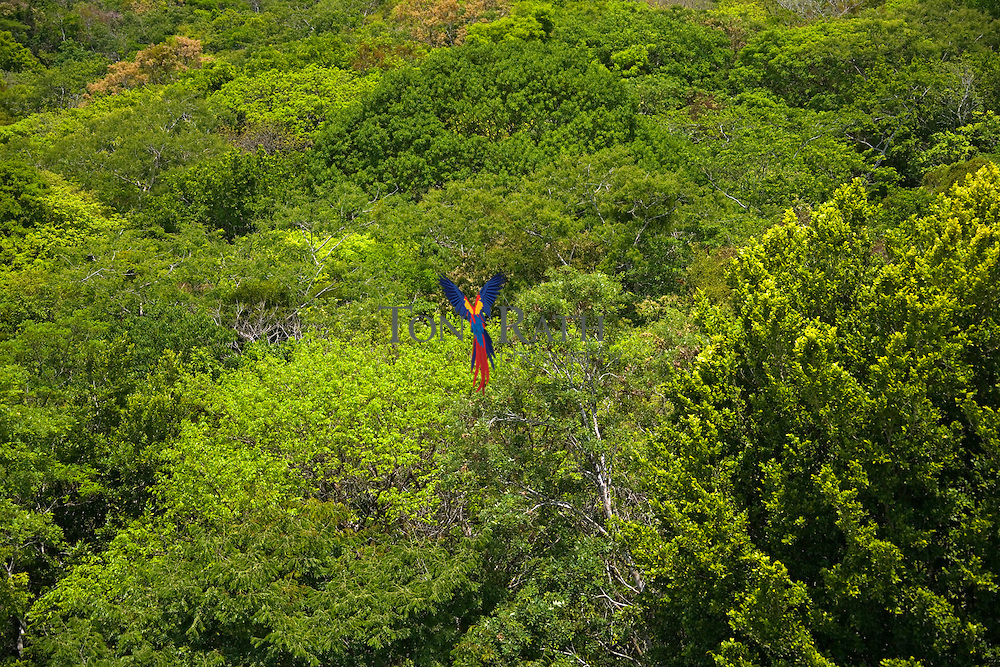 Wild bush, Xunantunich, Cayo District, Belize