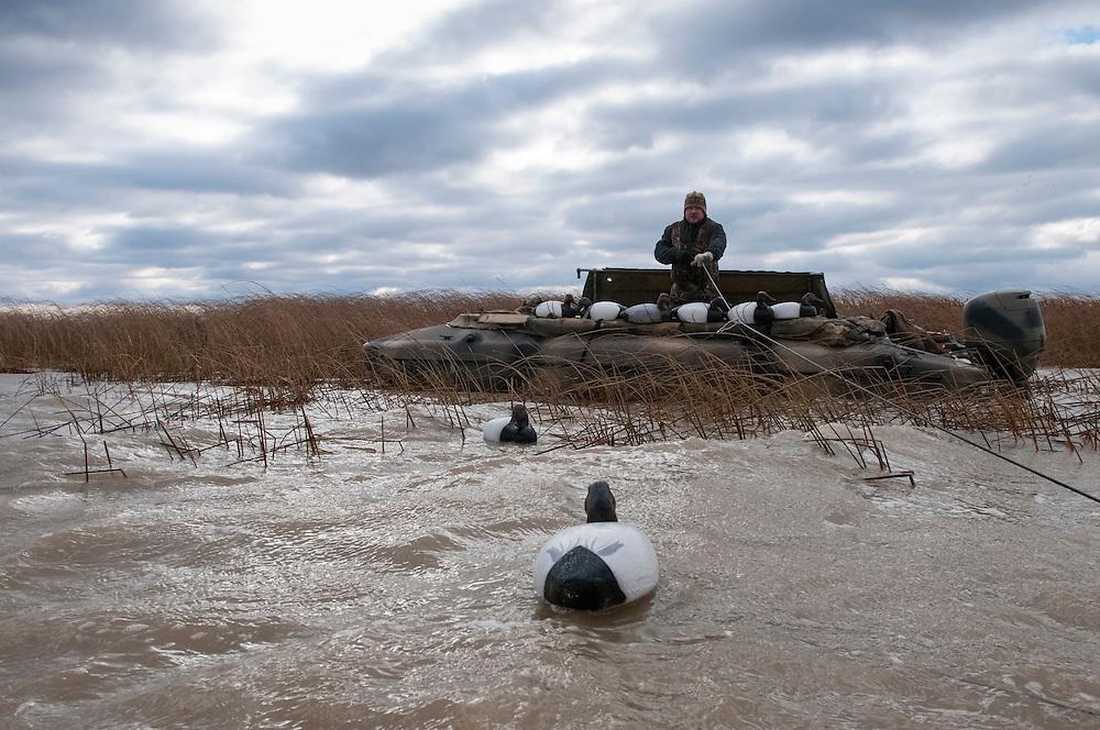 Canvasback Hunting, Aythya valisineria, Lake St. Clair, Ontario, Canada