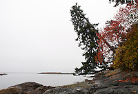 Fog rolls in on an early October day at Vantreight Beach near Victoria, BC