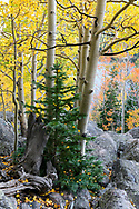 A still moment captured in Rocky Mountain National Park during autumn.<br /> <br /> Camera Model Name:NIKON D850<br /> X Resolution:600<br /> Y Resolution:600<br /> Resolution Unit:inches<br /> Software:Adobe Photoshop Lightroom Classic 7.5 (Windows)<br /> Modify Date:2018-09-23 16:53:03 GMT<br /> Exposure Time:1/80<br /> F Number:8<br /> Exposure Program:Aperture-priority AE<br /> ISO:1100<br /> Sensitivity Type:Recommended Exposure Index<br /> Recommended Exposure Index:1100<br /> Exif Version:0230<br /> Date/Time Original:2018-09-18 17:43:41 GMT<br /> Create Date:2018-09-18 17:43:41 GMT<br /> Shutter Speed Value:1/80<br /> Aperture Value:8<br /> Max Aperture Value:1.7<br /> Metering Mode:Center-weighted average<br /> Light Source:Unknown<br /> Flash:No Flash<br /> Focal Length:35.0 mm<br /> Sub Sec Time Original:44<br /> Sub Sec Time Digitized:44<br /> Color Space:sRGB<br /> Focal Plane X Resolution:2301.324615<br /> Focal Plane Y Resolution:2301.324615<br /> Focal Plane Resolution Unit:cm<br /> Sensing Method:One-chip color area<br /> File Source:Digital Camera<br /> Scene Type:Directly photographed<br /> CFA Pattern:[Red,Green][Green,Blue]<br /> Custom Rendered:Normal<br /> Exposure Mode:Auto<br /> White Balance:Auto<br /> Focal Length In 35mm Format:35 mm