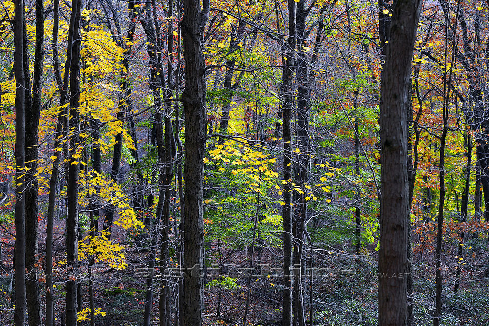 Day light in Fall forest, autumn, tree.