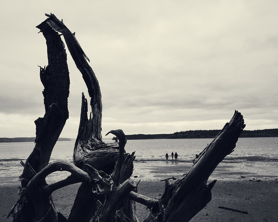 A walk along Puget Sound in the Pacific Northwest. A large stump drifted up the beach and was partially buried in the sand. Taken with an iPhone6