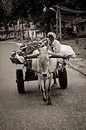 A man riding on a cart being pulled by a cow in Bangalore, India.