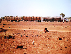A Kimberley roadtrain carrying cattle circa 1980.