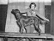 """28/12/1952<br /> 12/28/1952<br /> 28 December 1952<br /> Dog Show, Dublin Society at Portabello Barracks, Miss P. Kelly, Naas with """"Cilldara Robinhood"""", open dog class, Green Star, best of breed, also cup for best in Gundog group;"""