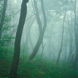 Hawkes Trail, Mt. Hor, Vermont. Fog fills the forest below Mt. Hor near Vermont's Lake Willoughby. Northern Forest.
