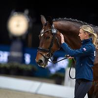 Horse Inspection - Dressage - 2018 FEI World Cup Finals - Paris, France