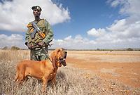 Machine - a tracker dog in northern Kenya