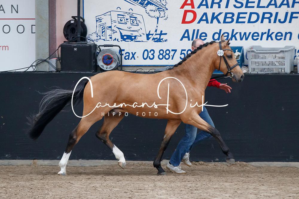 005, Tout Beau de la Cure<br /> Hengstenkeuring Brp<br /> 3de phase - Hulsterlo - Meerdonk 2018<br /> © Hippo Foto - Dirk Caremans<br /> 16/03/2018