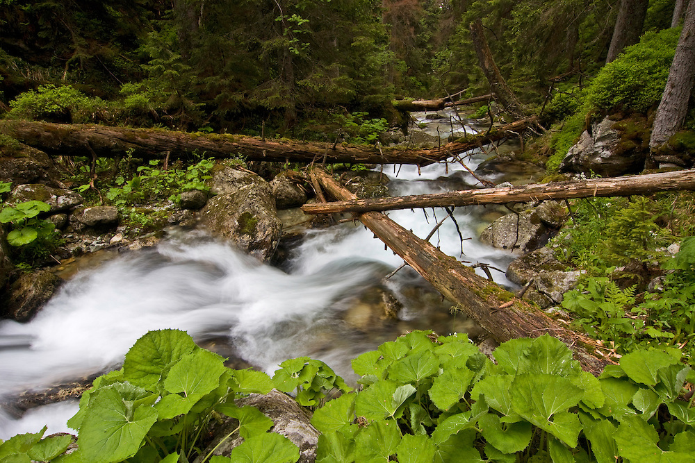 Mountain stream with fallen trees crossing pristine forest in the Kouprova valley. Western Tatras, Slovakia. June 2009. Mission: Ticha