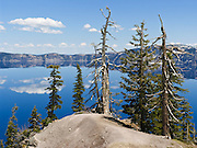 New trees grow beside old white bare tree snags and the deep blue reflective lake at Crater Lake National Park, Oregon, USA.