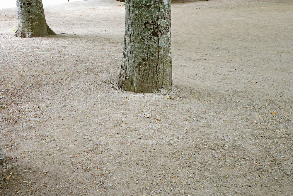 base of trees with just raked ground