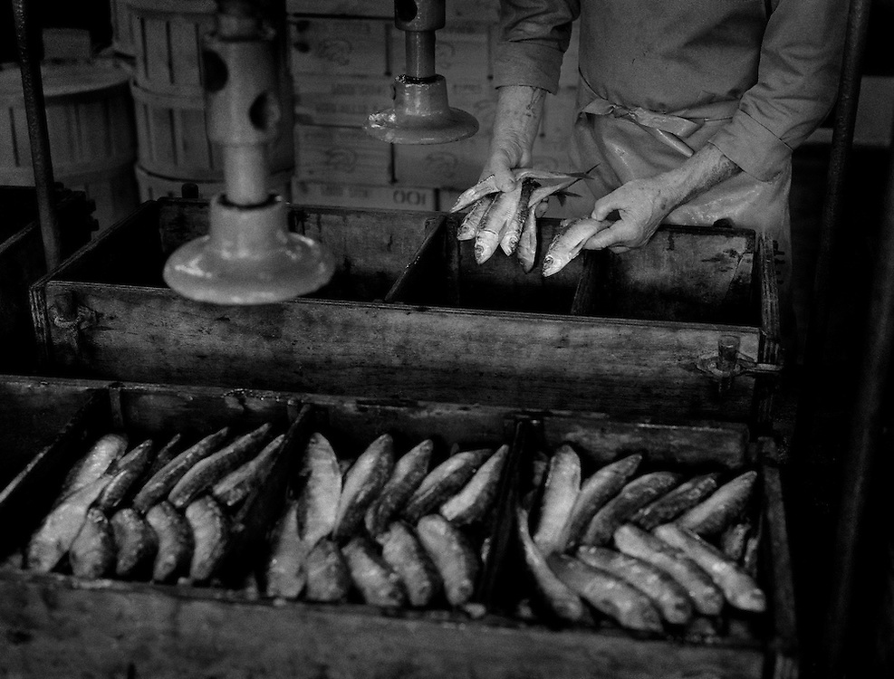 The Pilchard Works.<br /> Packing sardines into the 'coffins'.<br /> <br /> Salted pilchards have been exported from Cornwall to the continent since the 16th century and the 'Pilchard Works' in Newlyn has been selling this traditional product to the same Italian family since 1905. <br /> <br /> Since becoming a 'working museum' in 1995 it has won two national awards but on 28/10/05 it closed down due to a decline in the demand for this kind of presentation. <br /> <br /> The custom of pressing salted, whole-ungutted fish, with heads still attached into wooden containers has now been superseded by more modern packaging and freezing techniques. <br /> <br /> As the 'Pilchard Works' was the last establishment in the U.K. to employ these methods, what was once the mainstay of the Cornish fishing industry has now gone forever.