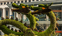 Shanghai, China - April 7, 2013: dragons sculptured trees in pudong at the city of Shanghai in China on april 7th, 2013
