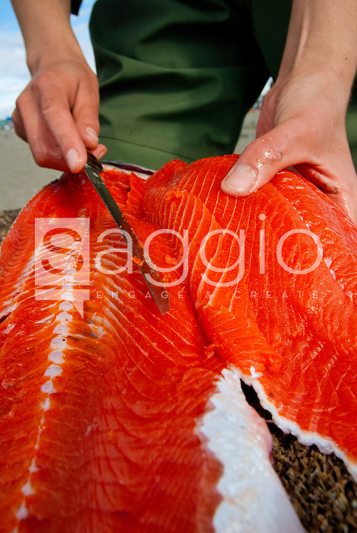 A person filets a silver salmon.
