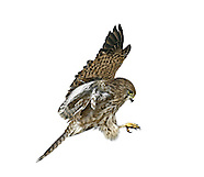 BIRD CUT-OUTS