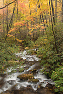Small stream and autumn colors, Pisgah National Forest near Brevard, North Carolina
