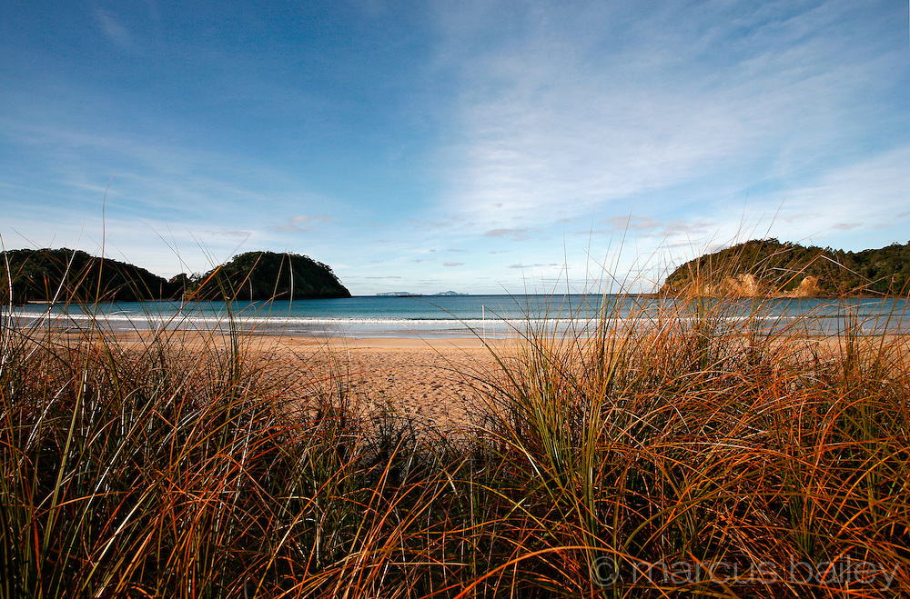 fiery red and green beach grass on the dunes at matapouri bay with its calm blue ocean and headland, northland, new zealand