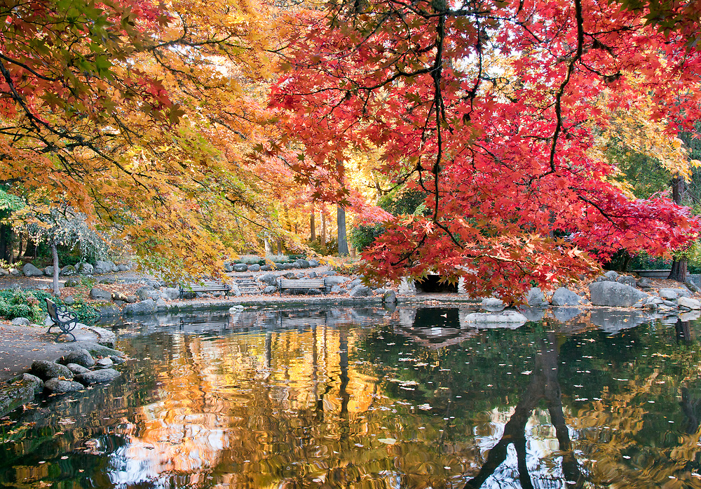 Lower Duck Pond in early morning, a canvas of fall color, Lithia Park, Ashland, Oregon.