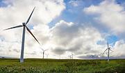 Windmills, Hawi, North Kohala, The Big Island of Hawaii