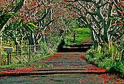 Image of a road along the Road to Hana on Maui, Hawaii, Hawaiian Islands