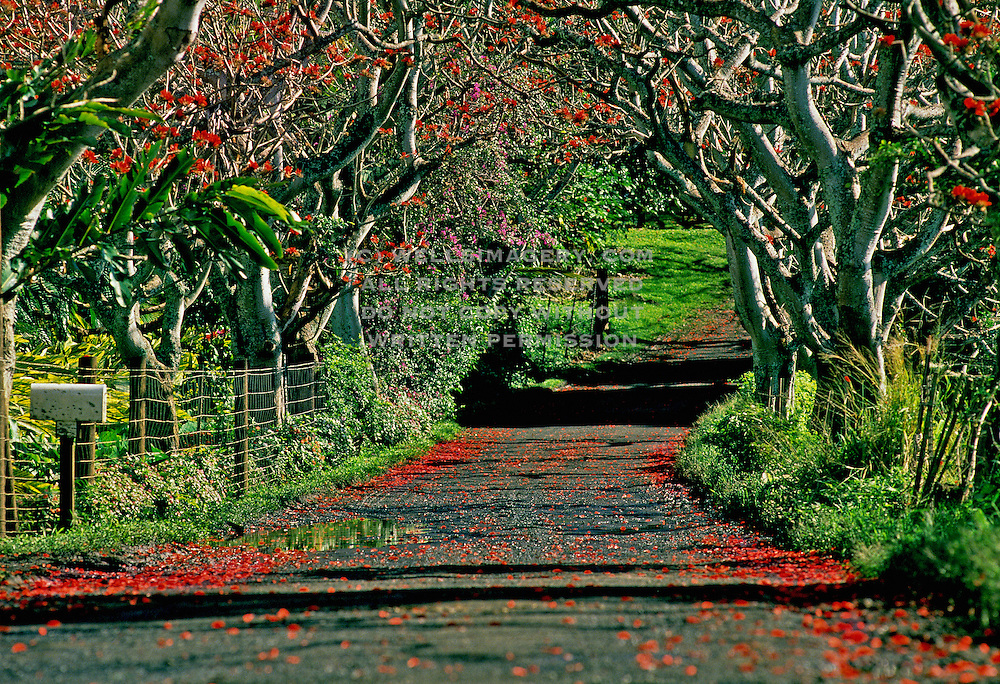 Image Of A Road Along The To Hana On Maui Hawaii Hawaiian Islands
