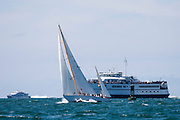 Dorade sailing in the Nantucket Opera House Cup.