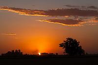 COSECHADORA COSECHANDO TRIGO (Triticum sp.), SAN ANDRÉS DE GILES, PROVINCIA DE BUENOS AIRES, ARGENTINA (PHOTO © MARCO GUOLI - ALL RIGHTS RESERVED)