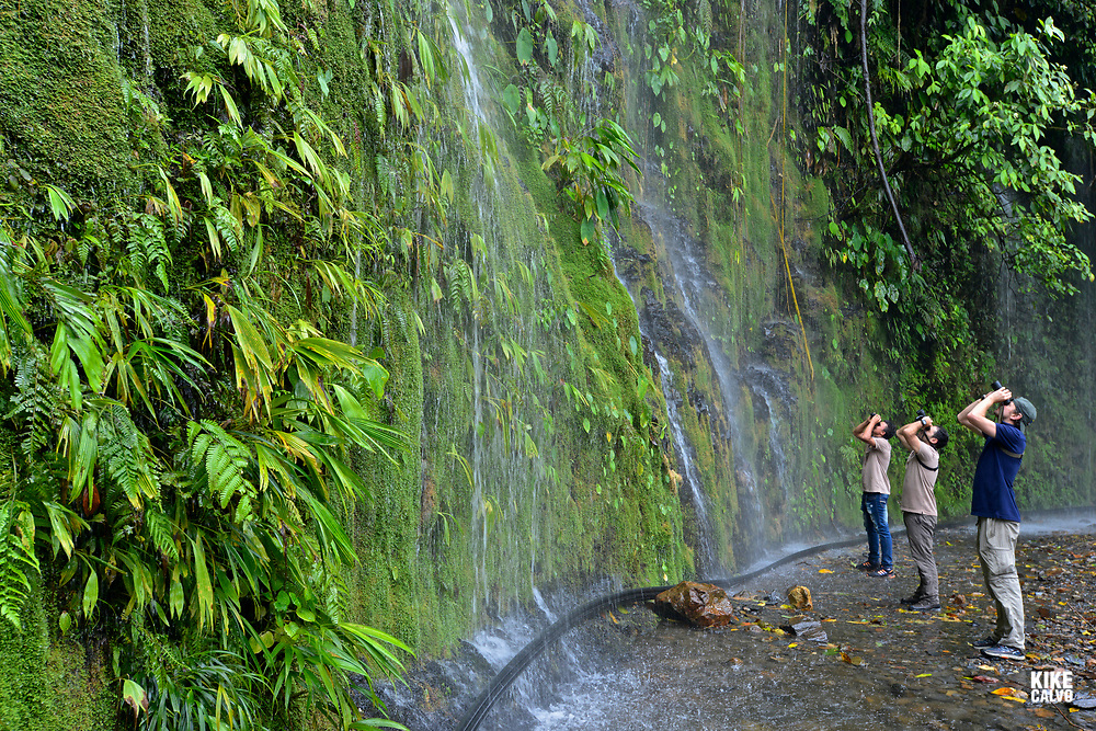 Birdwatching on the western slope of the West Andes and part of the Chocó Biogeographic Region.