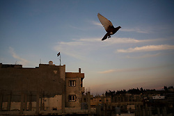 A pigeon flies over homes in the Nahr al-Bared Palestinian refugee camp, months after fighting between the Lebanese army and extremists came to an end.