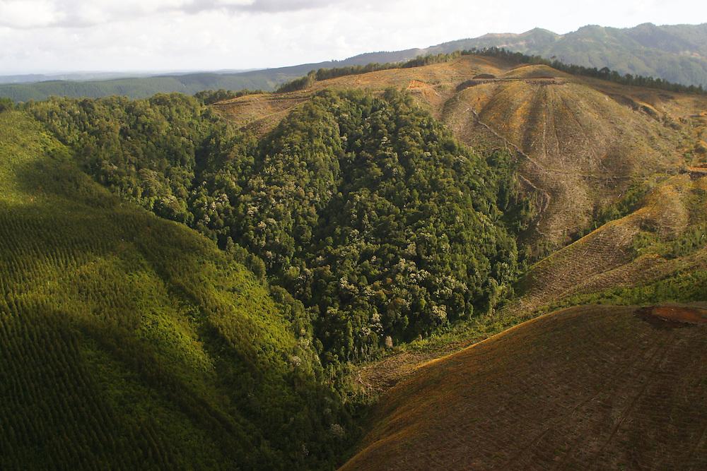 Aerial view of a tree plantation in the sector of Cordillera Costa-Lebu, Chile, Feb. 16, 2004. Daniel Beltra/Greenpeace.