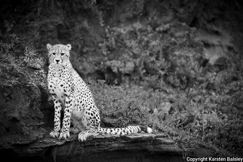 &ldquo;Patience&rdquo;                                                        Tanzania<br />