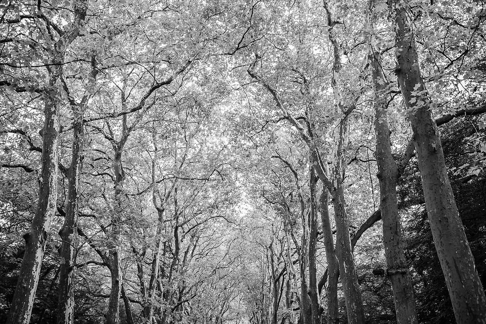 Chenonceau Castle Tree Path - Chenonceau, Loire Valley, France, July 2017