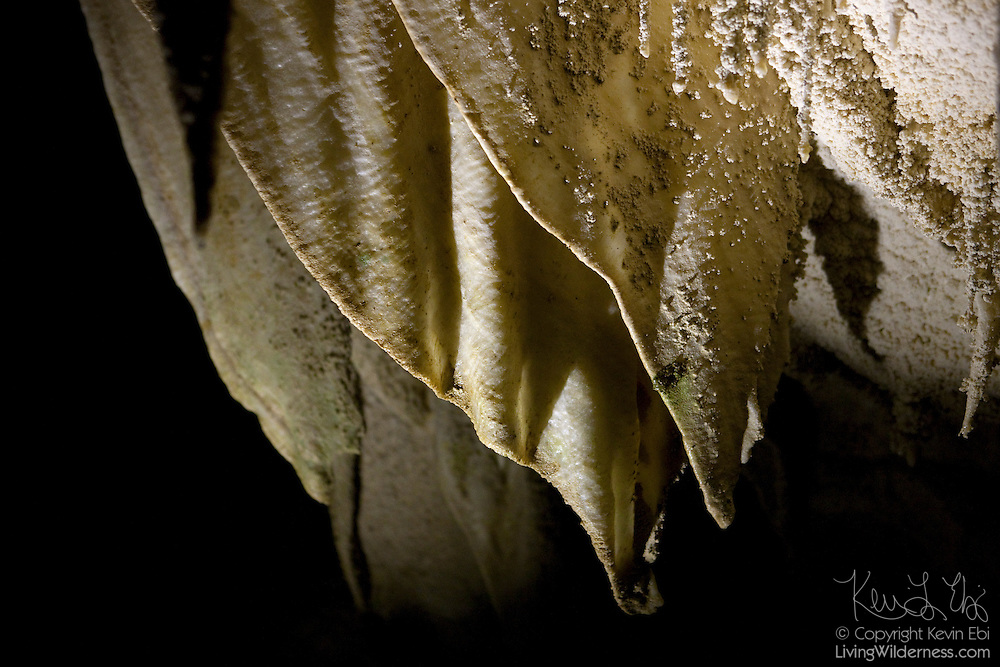 Dramatic limestone curtains form the ceiling of the Ruakuri Cave, located in Waitomo, New Zealand. These limestone curtains are a type of stalactite. Water drips from above, disolving limestone. Where the water evaporates, the limestone is left behind. The limestone curtains are formed along a line where water drips from several places.