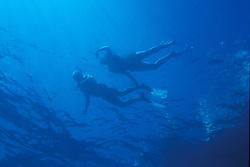 water; ocean; snorkeling; key largo florida