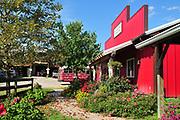 Texas Longhorn Cattle at Dickinson Cattle Company, Barnesville, Ohio.