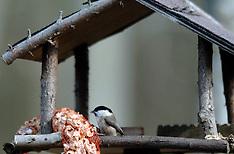 20050316 NED: Vogels in de buurt, Maarssen