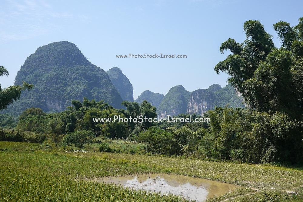 China, Yangshuo town rice paddies