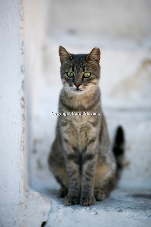 Cats at Livadia, Tilos, Dodecanese, Greece