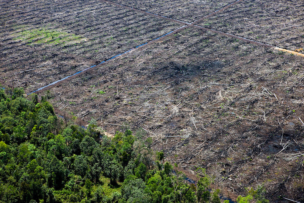 Forest land clearing east of Pekanbaru, Sumatra, Indonesia, Aug. 30, 2008..Daniel Beltra/Greenpeace