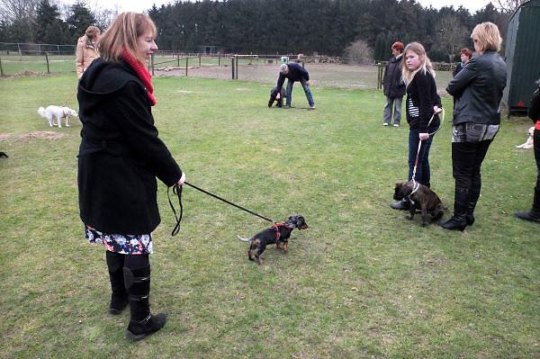 Nederland, Molenhoek, 17-3-2012Jonge honden, puppies, op de puppycursus.Foto: Flip Franssen/Hollandse Hoogte